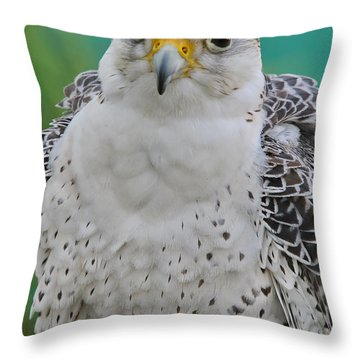 Gyrfalcon Throw Pillow by Deborah Benoit