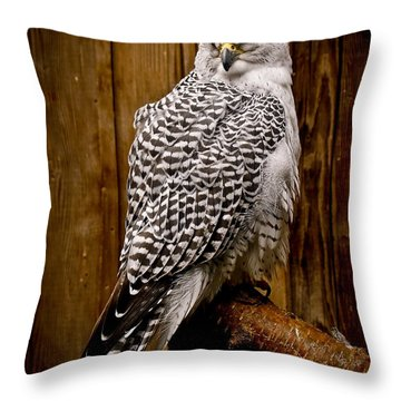 Gyrfalcon Perched Throw Pillow by Steve McKinzie