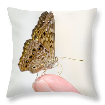 Hackberry Emperor On Finger Throw Pillow