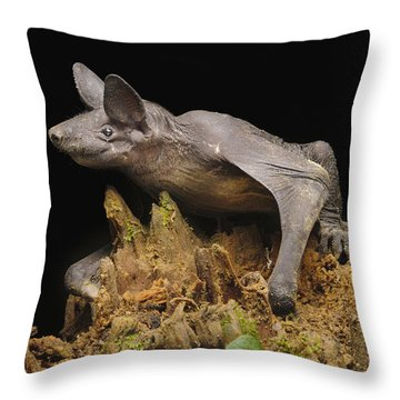 Hairless Bat Tibu Batang Ai Np Malaysia Throw Pillow by Ch'ien Lee