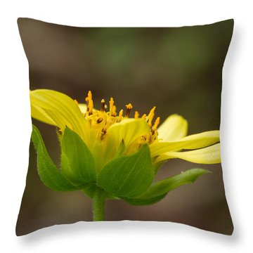 Throw Pillow featuring the photograph Hairy Leafcup by Paul Rebmann
