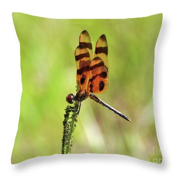 Halloween Pennant Throw Pillow by Al Powell Photography USA