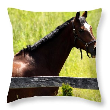 Handsom Horse Throw Pillow