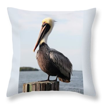 Handsome Brown Pelican Throw Pillow