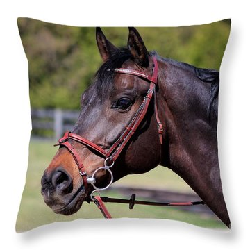 Handsome Gelding Throw Pillow