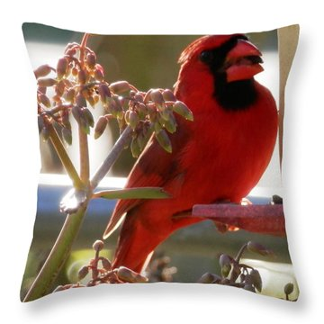 Handsome Red Male Cardinal Visiting Throw Pillow