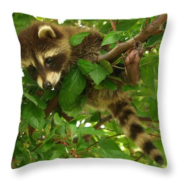 Throw Pillow featuring the photograph Hang In There by James Peterson