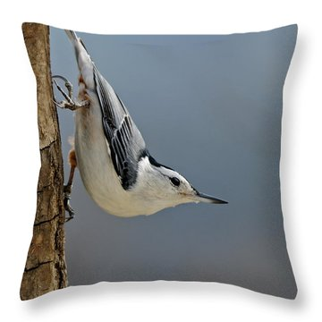Hangin Around Throw Pillow by Lara Ellis
