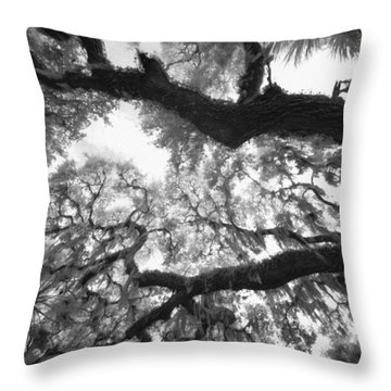 Throw Pillow featuring the photograph Hanging Moss by Bradley R Youngberg