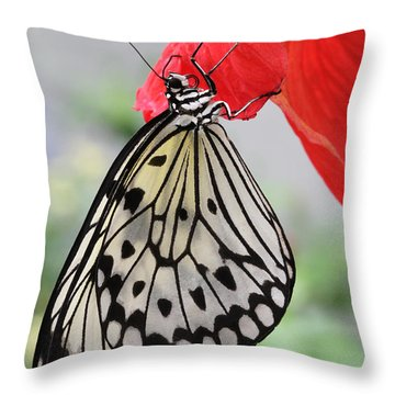 Throw Pillow featuring the photograph Hanging On #2 by Judy Whitton