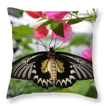 Hanging On Throw Pillow by Judy Whitton