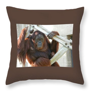 Throw Pillow featuring the photograph Hanging Out - Melati The Orangutan by Emmy Marie Vickers