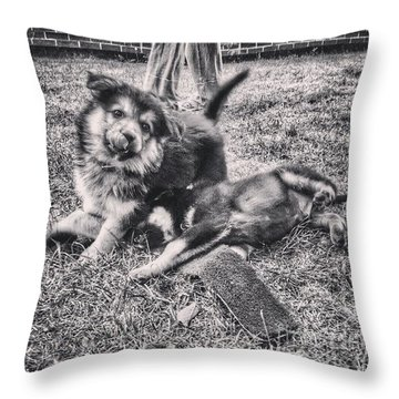 Hannah And Darcy At 8 Weeks Old.  #gsd Throw Pillow