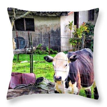 Throw Pillow featuring the photograph Hanzawa Cow 1 by Dawn Eshelman