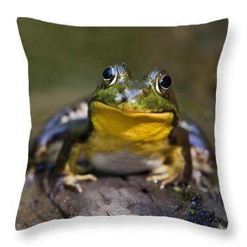 Happiness Frog Throw Pillow by Christina Rollo