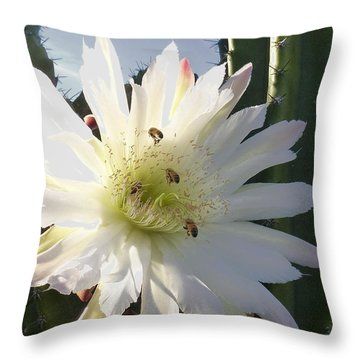 Throw Pillow featuring the photograph Happy Birthday Card And Print 9 by Mariusz Kula