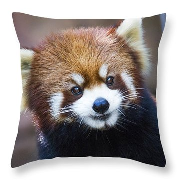 Happy Red Panda Throw Pillow by Jaki Miller