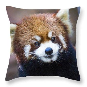 Red Panda Throw Pillows Fine Art America
