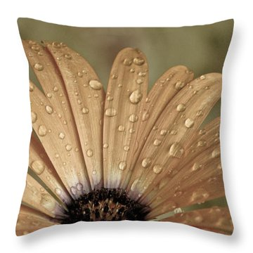 Happy To Be A Raindrop Throw Pillow by Trish Tritz