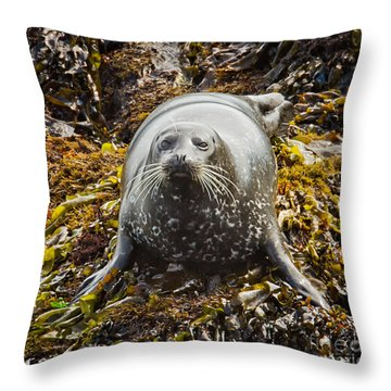 Harbor Seal Throw Pillow by Alice Cahill