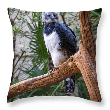 Throw Pillow featuring the photograph Harpy Eagle by Ken Stanback