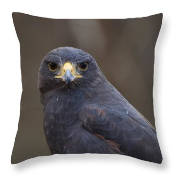 Harris Hawk Throw Pillow by Chris Flees