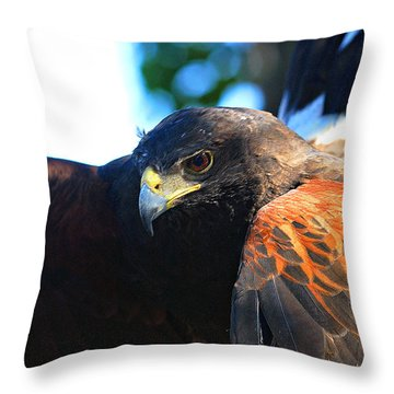 Harris Hawk - Close Up Throw Pillow