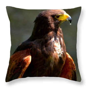 Harris Hawk In Thought Throw Pillow by Pravine Chester