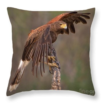 Harris's Hawk 1 Throw Pillow by Jerry Fornarotto