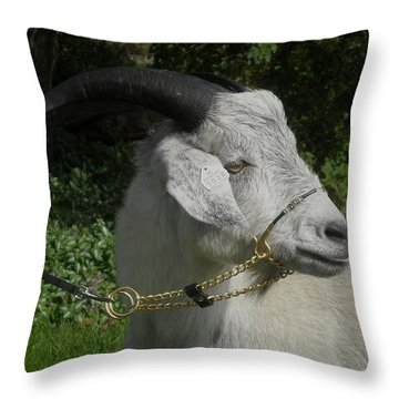 Harry T' Happiness 2013 Throw Pillow
