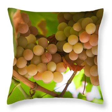 Harvest Time. Sunny Grapes II Throw Pillow by Jenny Rainbow