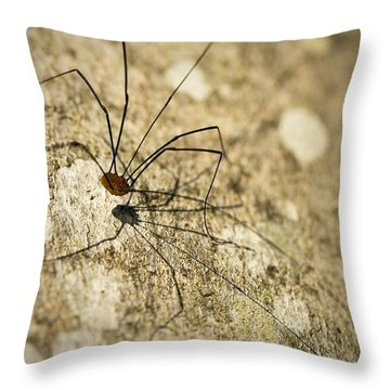 Throw Pillow featuring the photograph Harvestman Spider by Chevy Fleet