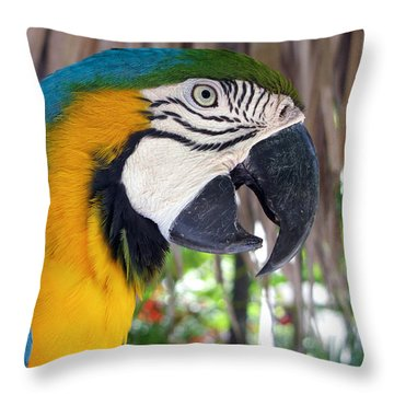 Harvey The Parrot 2 Throw Pillow