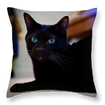 Havana Brown Cat Throw Pillow