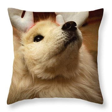 Have I Been A Good Doggie? Throw Pillow by Lois Bryan