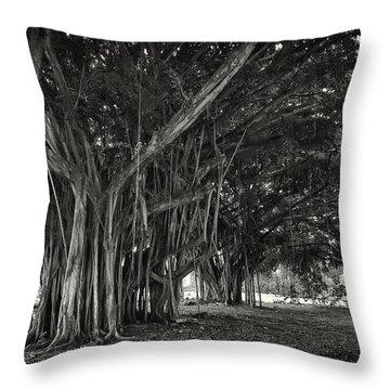 Hawaiian Banyan Tree Root Study Throw Pillow by Daniel Hagerman