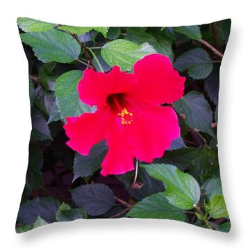 Hawaiian Flower Throw Pillow by Kenneth Cole