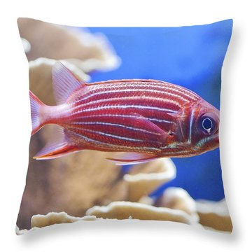 Hawaiian Squirrelfish Throw Pillow by Maj Seda