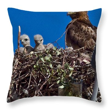 Throw Pillow featuring the photograph Hawk Babies by Brian Williamson