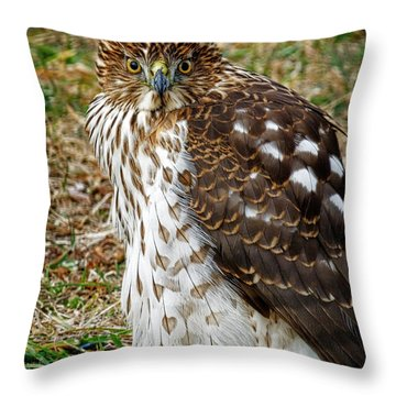 Hawk Throw Pillow by Dee Flouton