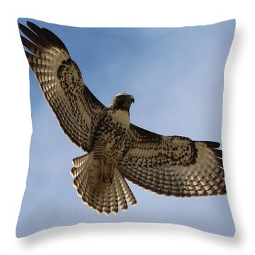 Hawk In Flight  Throw Pillow by Christy Pooschke