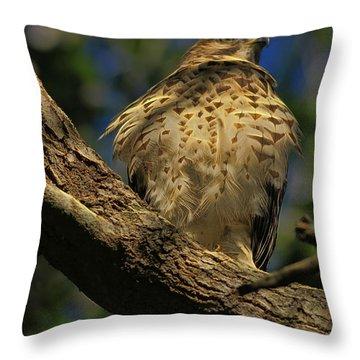 Hawk In Soft Light Throw Pillow by Deborah Benoit