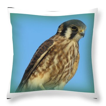 Hawk Medicine Throw Pillow