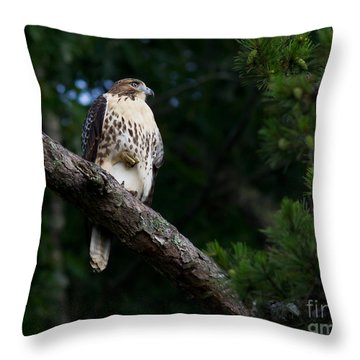 Hawk On Norris Lake Throw Pillow by Douglas Stucky