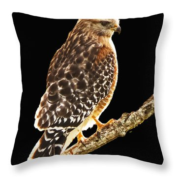 Hawk On Perch Throw Pillow