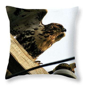 Throw Pillow featuring the photograph Hawk On Telephone Pole by William Selander