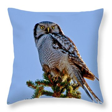 Hawk Owl Square Throw Pillow by Torbjorn Swenelius