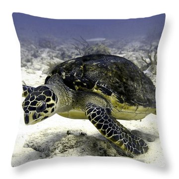 Hawksbill Caribbean Sea Turtle Throw Pillow by Amy McDaniel
