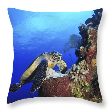 Hawksbill Sea Turtle And Gray Angelfish Throw Pillow