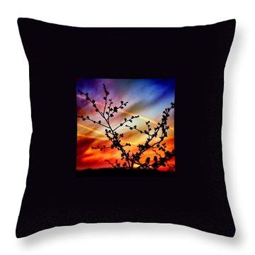 Hawthorn Sunset Throw Pillow